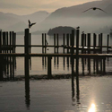 Gulls, some perched, some flying at Keswick Boat Landings, Derwentwater, Lake District